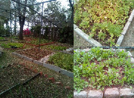 organic nursery of 7 Pines Hotel Kasauli