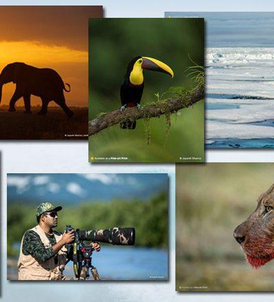 Jayanth Sharma Wild Photographer