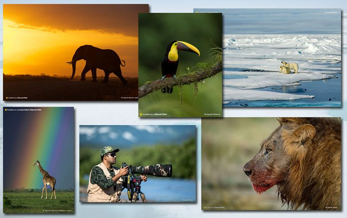 Jayanth Sharma Wild Photographer