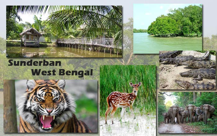 Sunderban West Bengal
