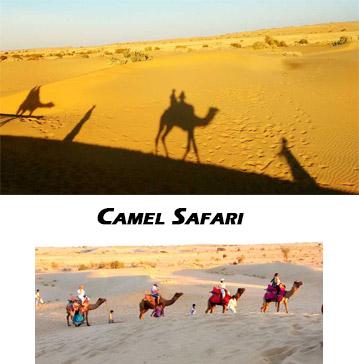 Camel Safari, Thar Desert Jaisalmer