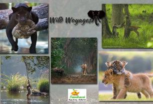 wild woyages