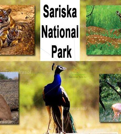 Sariska National Park Rajasthan