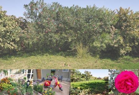 Maa Ashapura Farm, Greenery