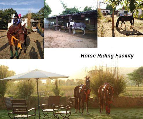Horse Riding Facility, Maa Ashapura Farm