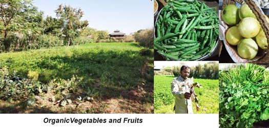 Organic Food, Maa Ashapura Farm